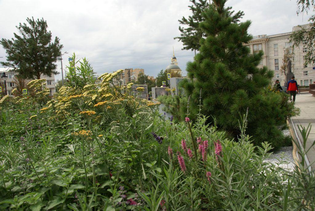 сад «Rock Garden», Дэмиен Мишель, Цветочный Джем, ИТАР-ТАСС, цветы, растения, сосна