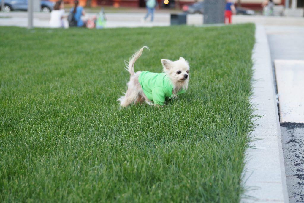 благоустройство, тимирязевский район, площадка для выгула собак, собака