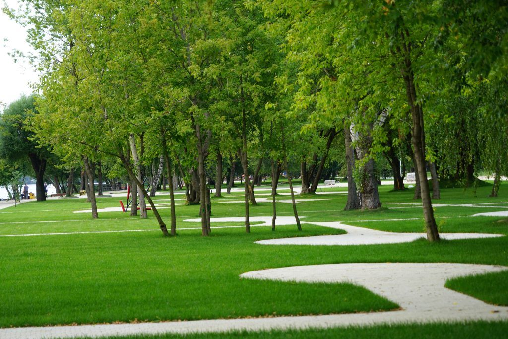 Капотня, благоустройство, мой район, озеленение, деревья