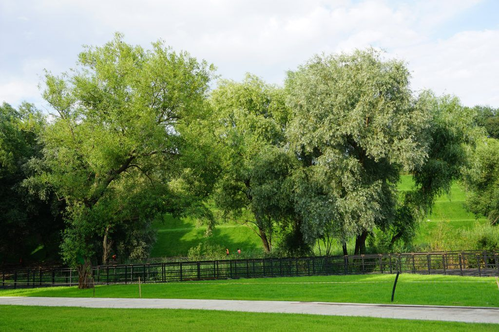 Капотня, благоустройство, мой район, озеленение