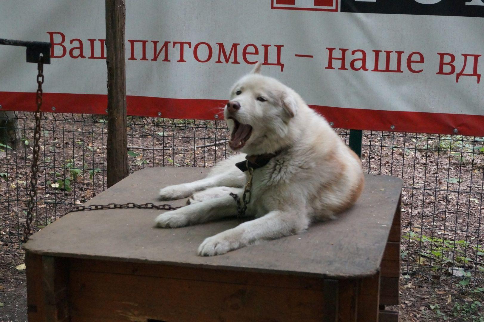 Хаски-парк, Сокольники