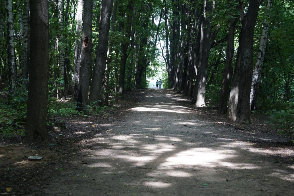 Тропинка, Кусковский лесопарк, Кусково, лес, деревья