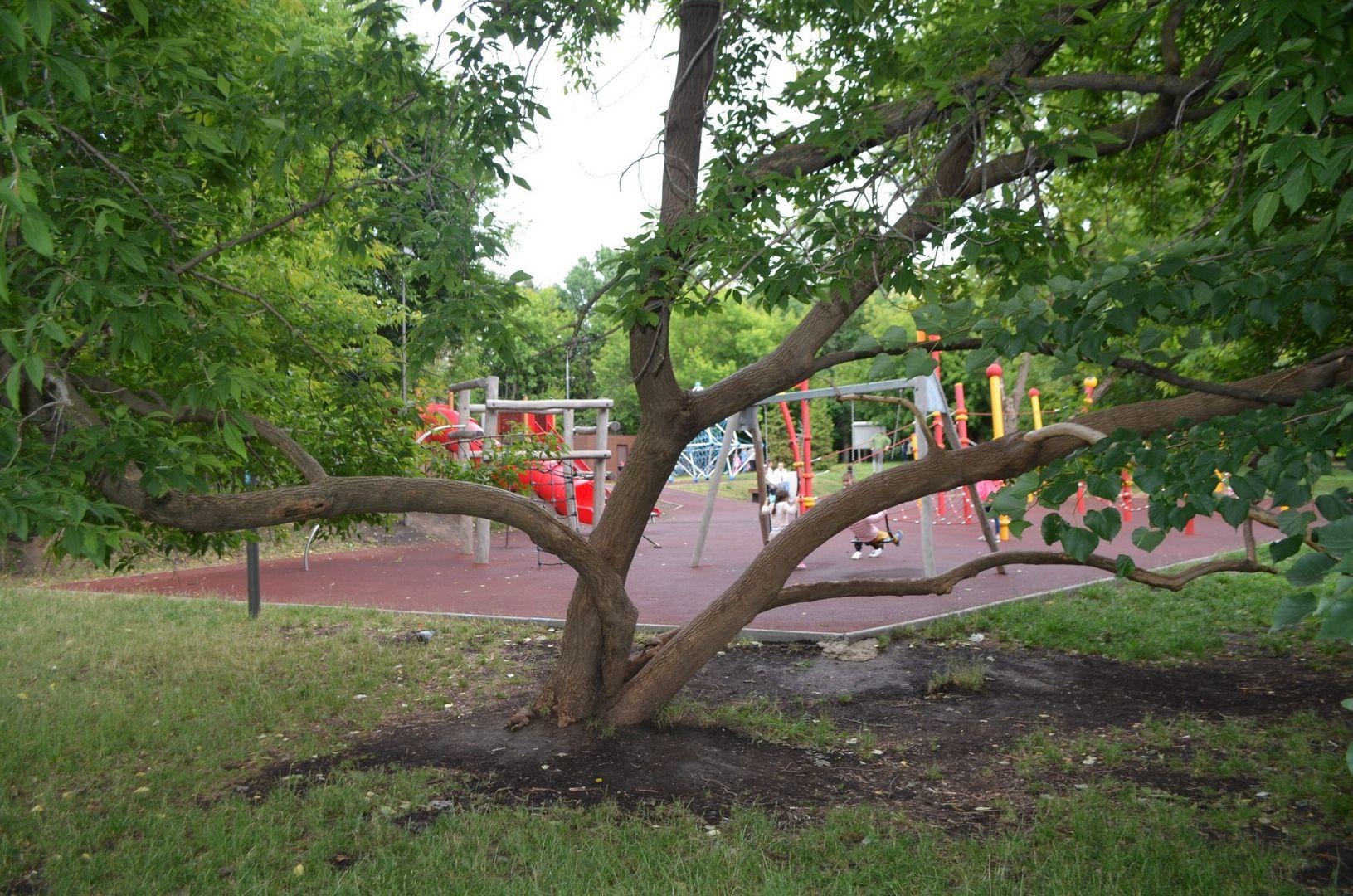 дерево, детская площадка