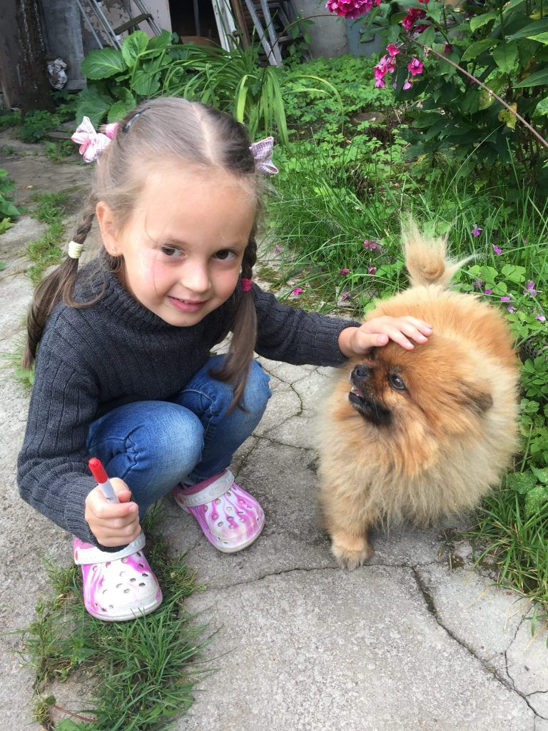 питомцы, собака