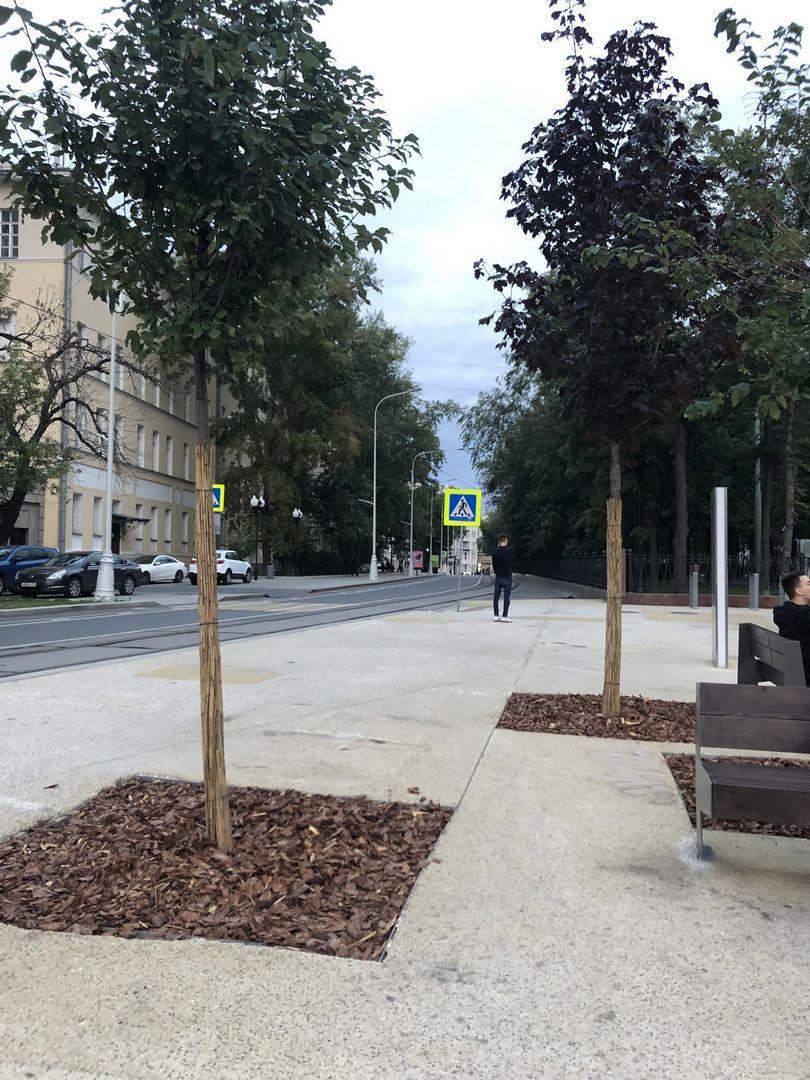 деревья, улица