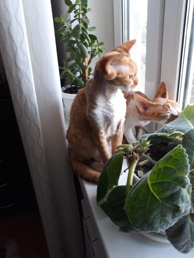 питомцы, кошки