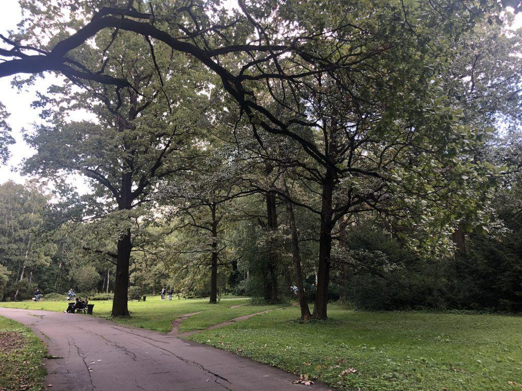 Главный Ботанический сад,деревья, дорожки