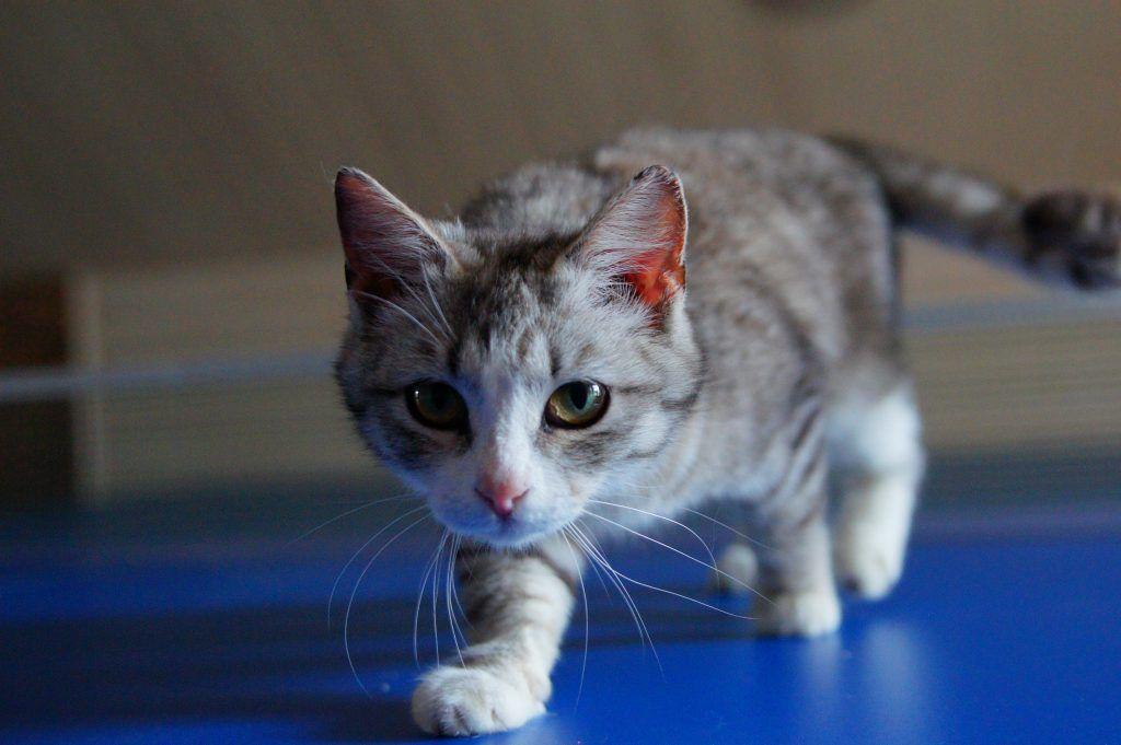 приют, кошка, выставка