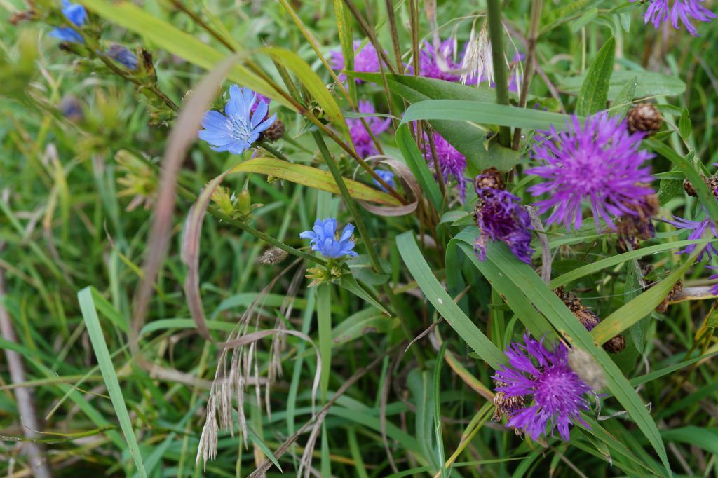 Терлецкий лесопарк, цветы