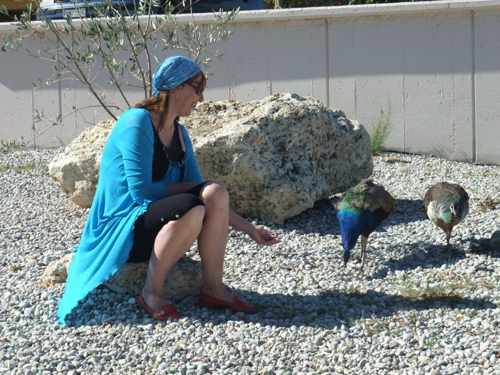 павлины, птицы, кормление