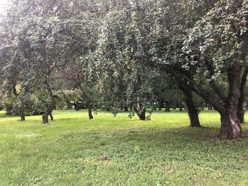 Главный Ботанический сад,деревья