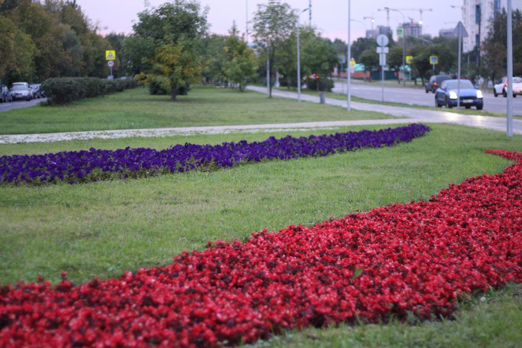 благоустройство, Строгино, озеленение, клумбы, цветы