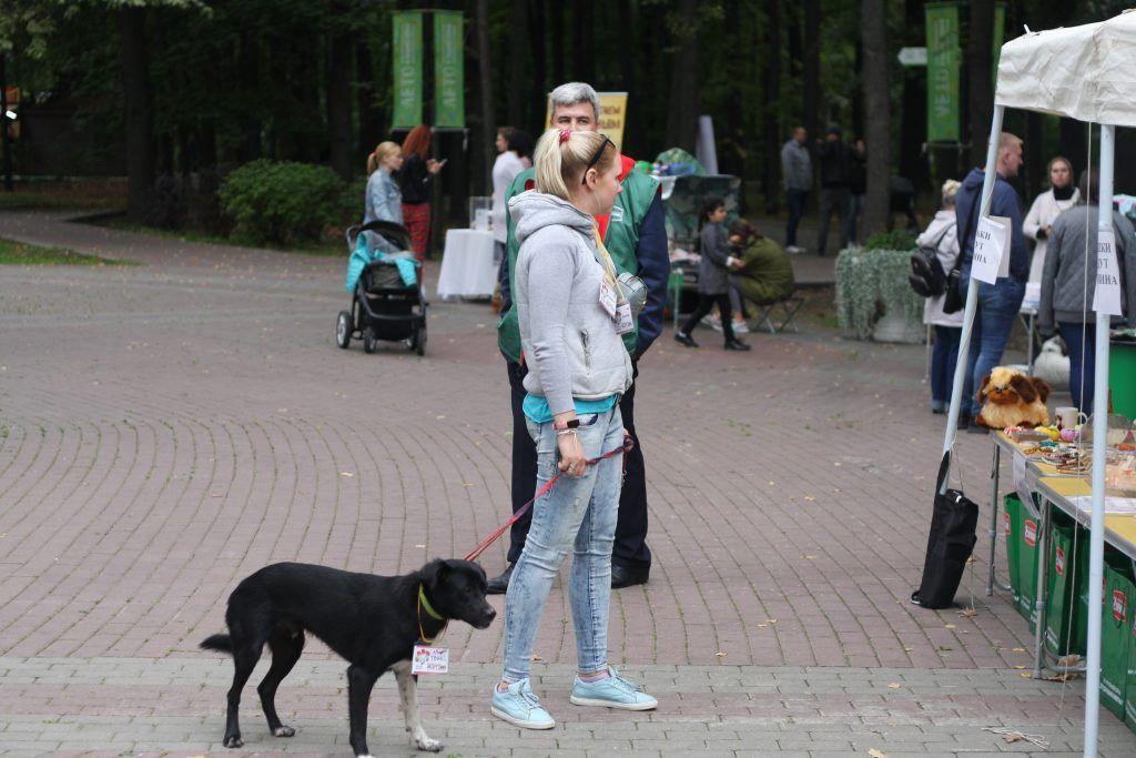 приют, собаки, выставка