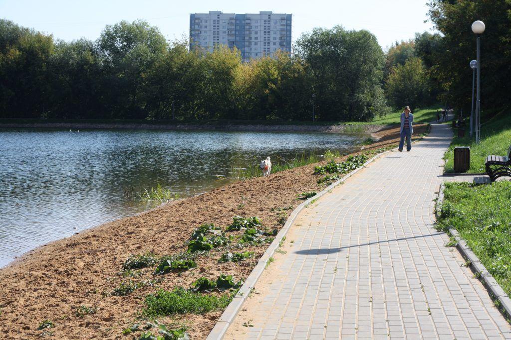 ГУП «Мосводосток», Южное Чертаново, Варшавские пруды, благоустройство, собака