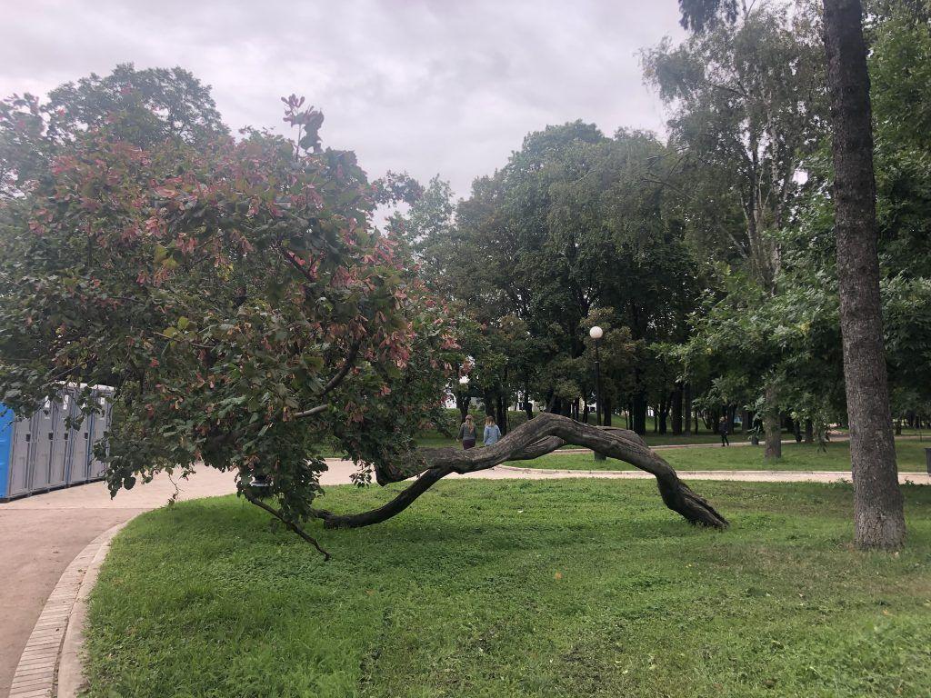 Новодевичьи пруды, деревья
