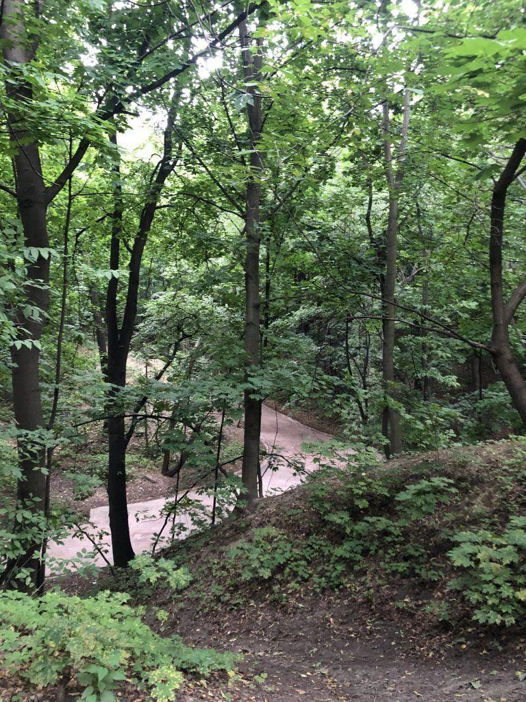 Нескучный сад, деревья, лес