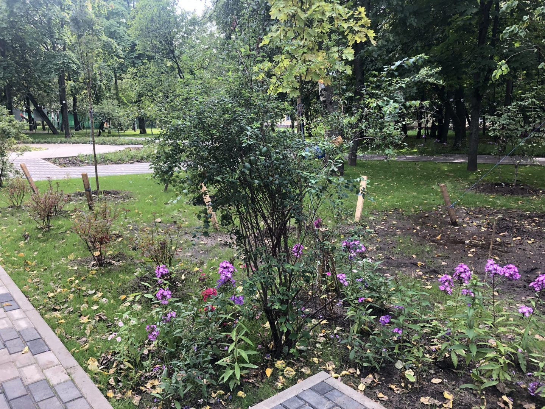 Новые растения в «Саду Ветеранов»