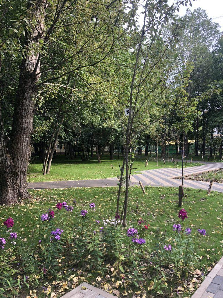 сад ветеранов, благоустройство, растения, цветы
