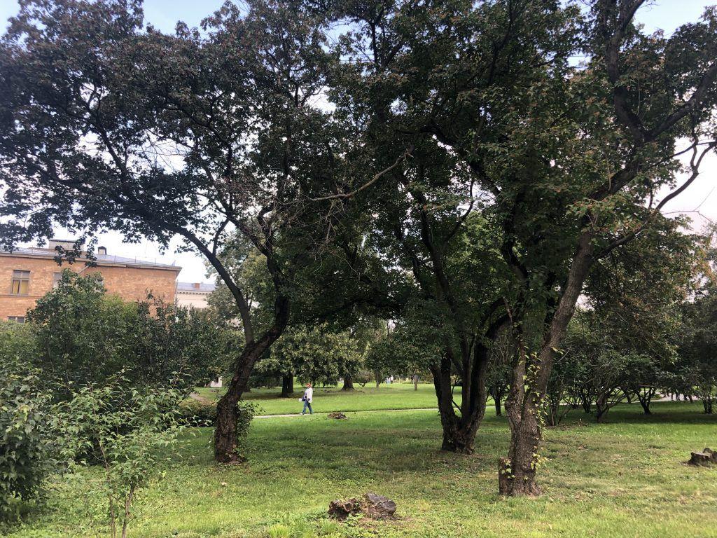 главный ботанический сад, парк