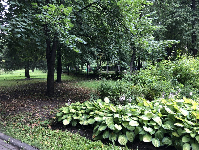 усадьба Трубецких, дорожки, деревья