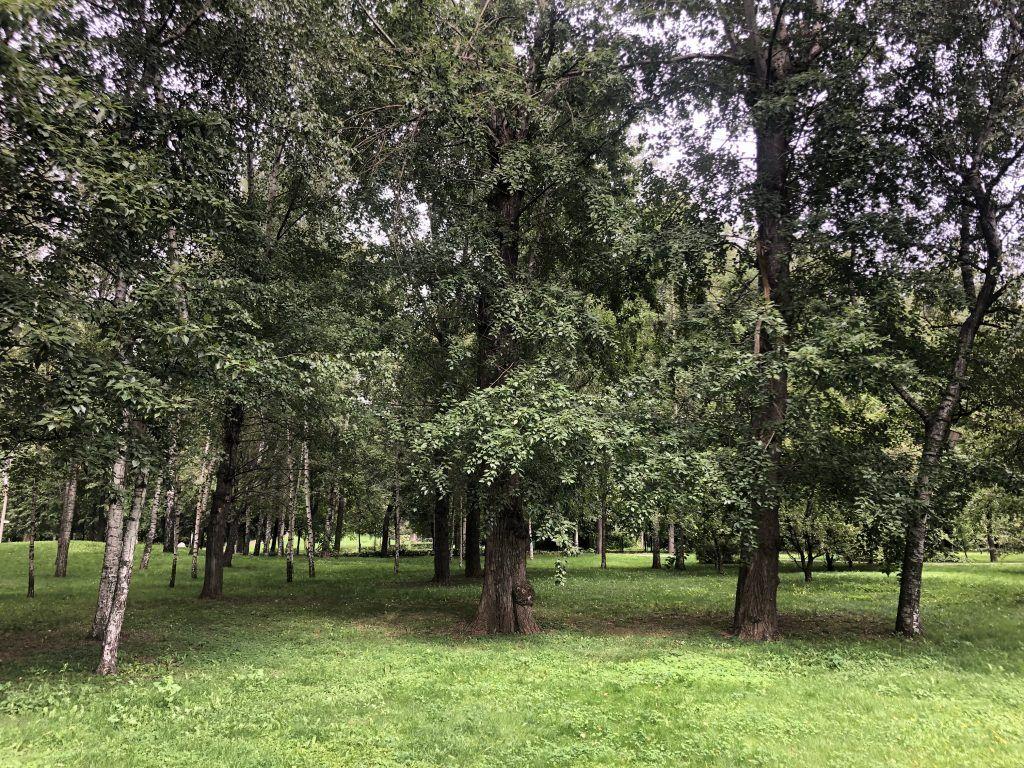 парк, Усадьба Трубецких в Хамовниках