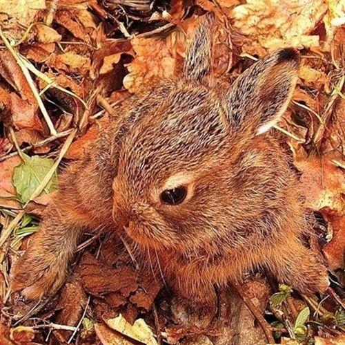 заяц, лес