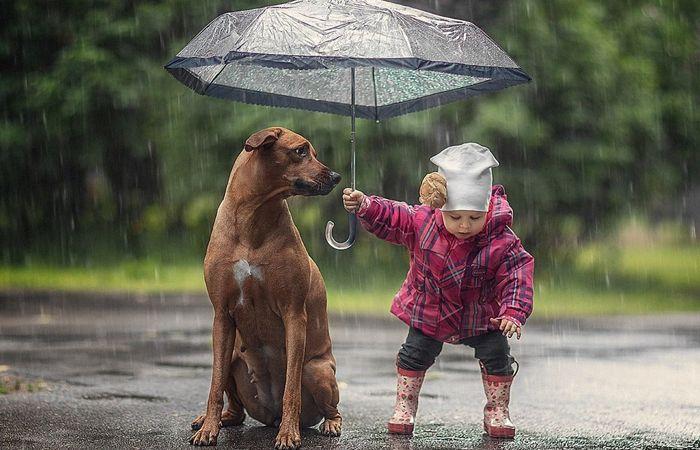 собака, лужи, дождь
