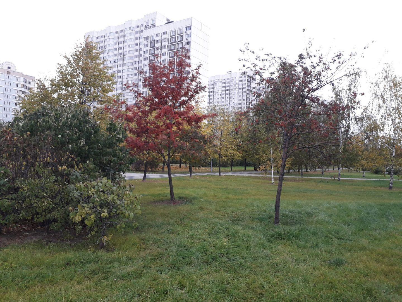 благоустройство, парк, Марьино