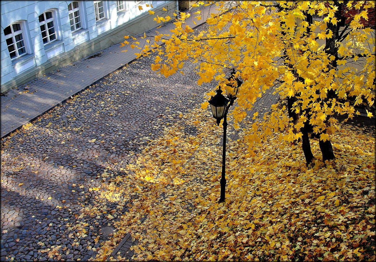 осень, листва