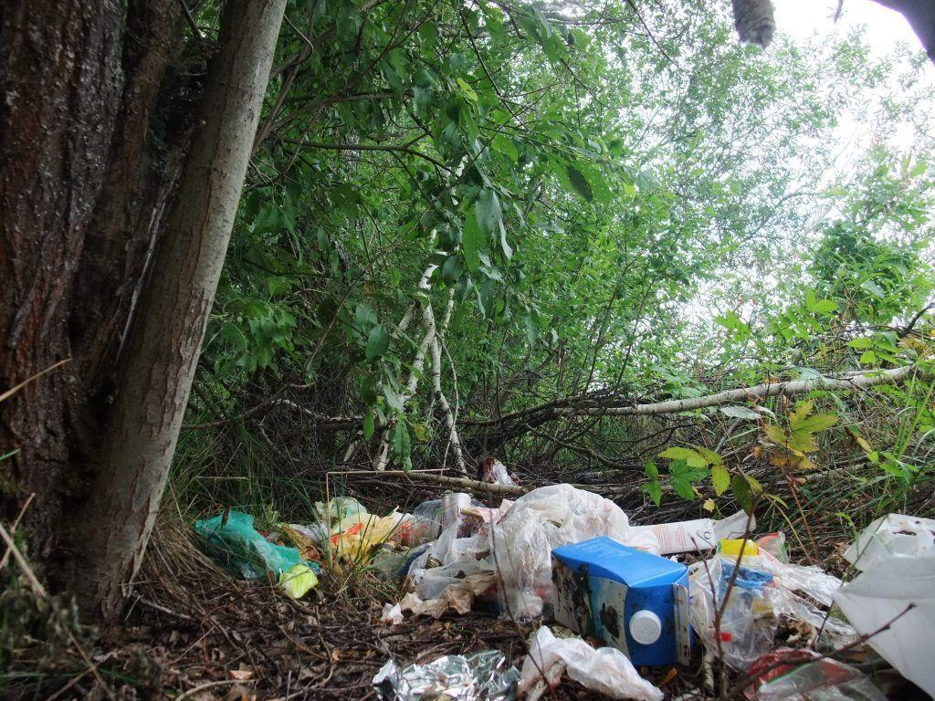 мусор, экология, лес