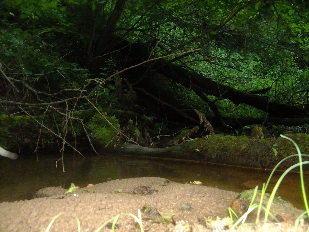 мусор, экология, лес, река