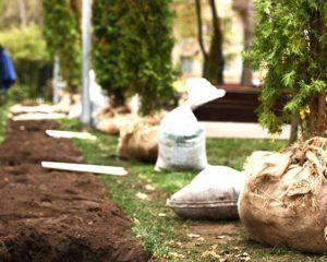 деревья, кустарники