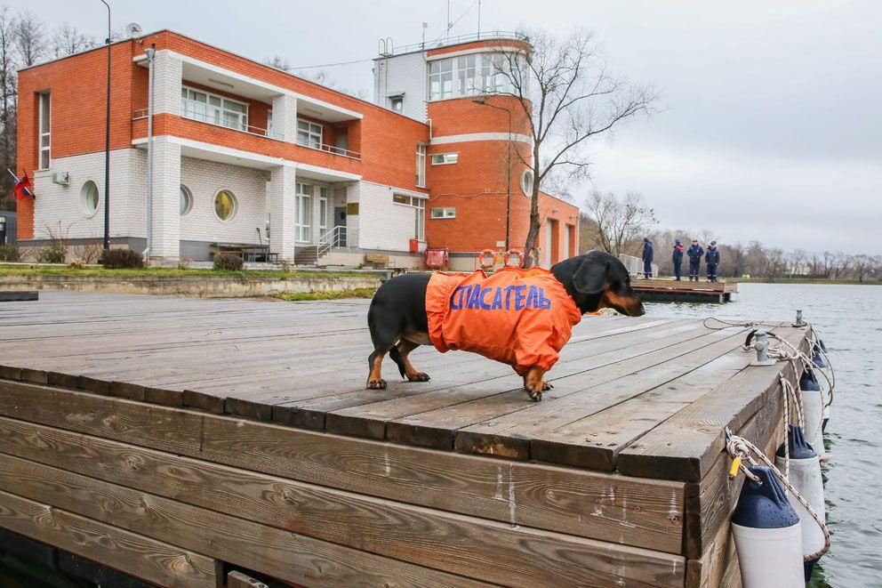 Поисково-спасательная станция «Мещерская», спасатели, собака