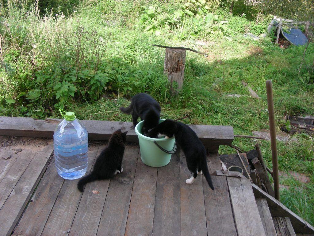 коты, черные коты
