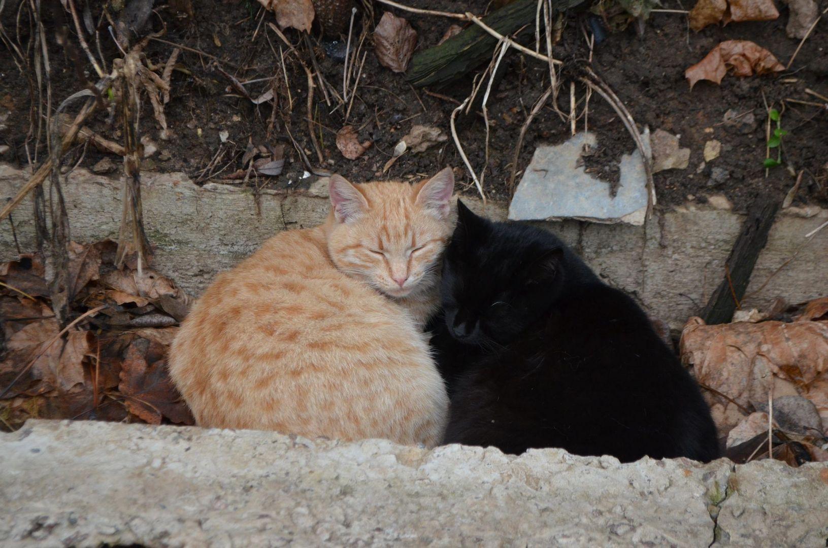 Бездомные коты и кошки, живущие у заброшенного много лет назад кафе на берегу Большого Садового пруда в Тимирязевском парке САО.