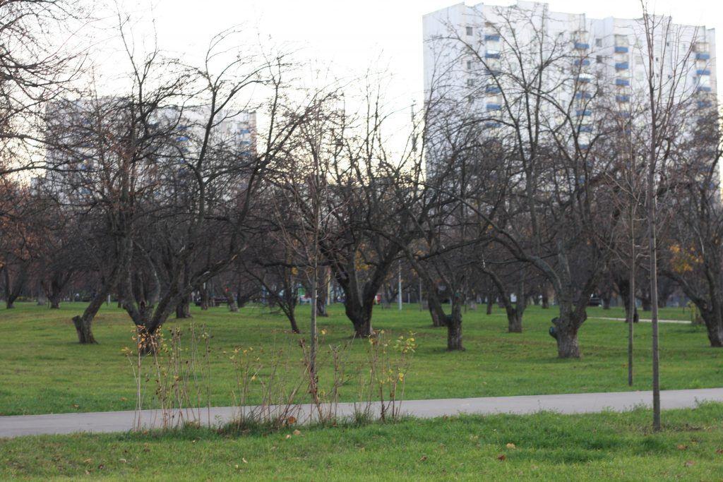 Яблоневый сад, благоустройство
