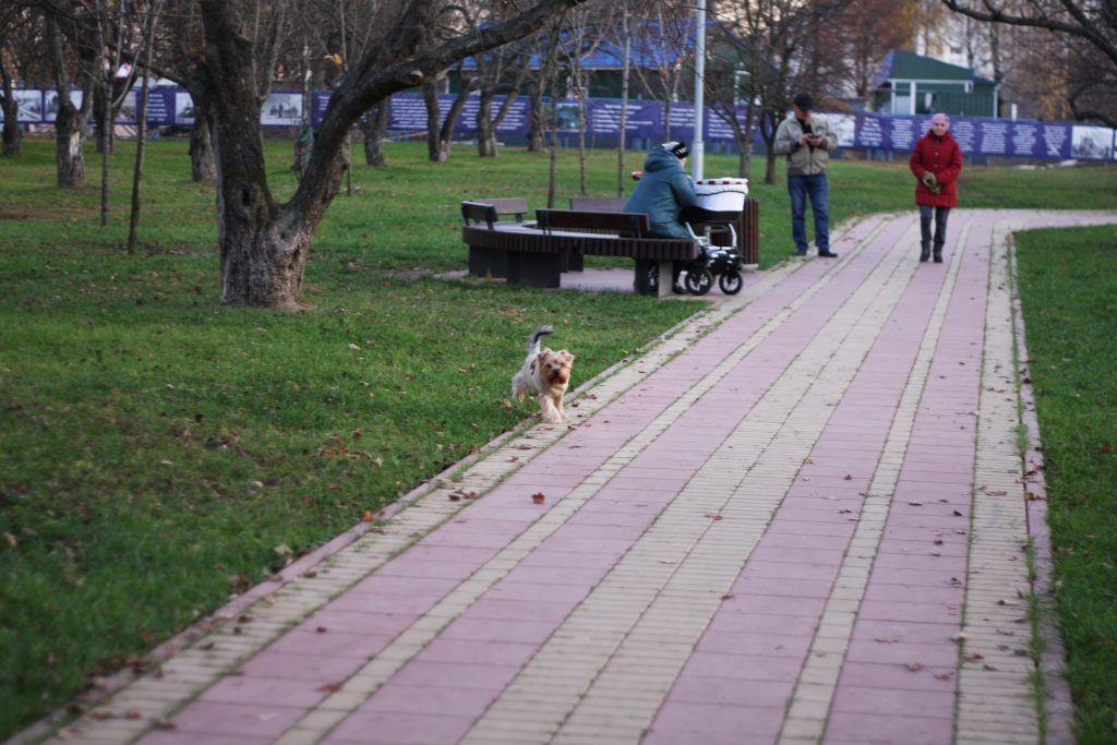 Яблоневый сад, благоустройство, дорожки, собака