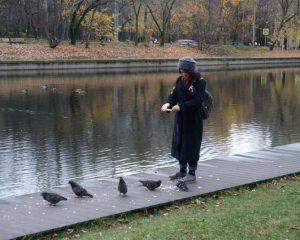 пруд, птицы, стресс, тишина