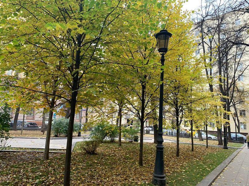 деревья, осень, фонарь