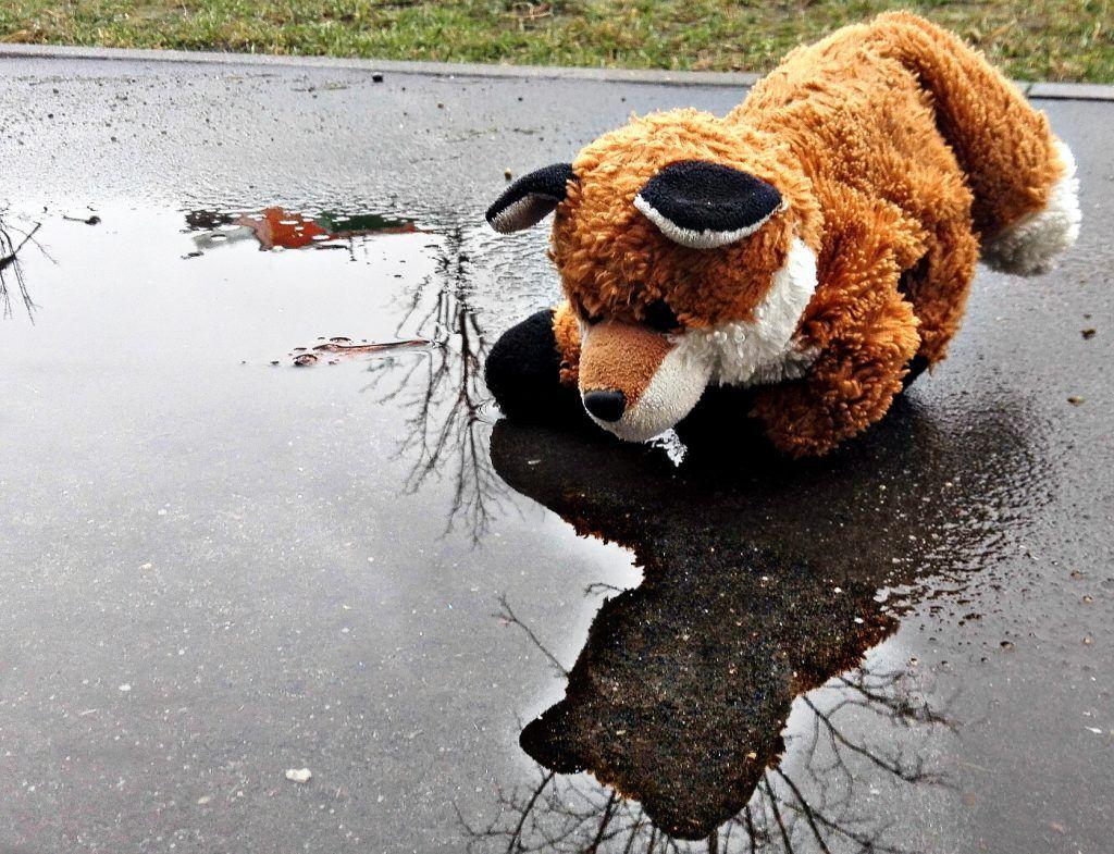 бездомные животные, приюты, животные, улица