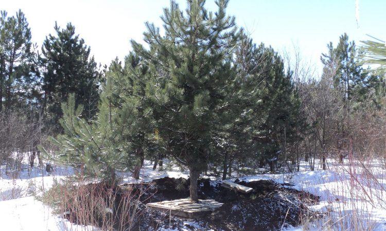 400 деревьев высадили в парке центра «Cколково»