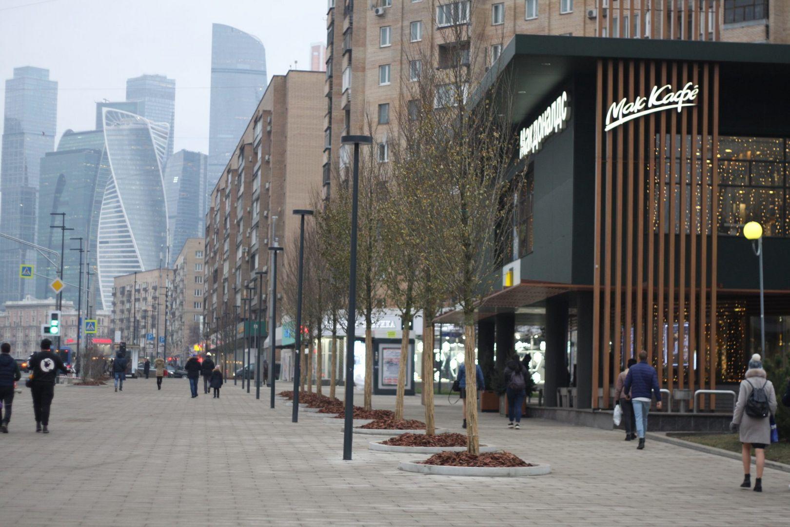 Деревья на Большой Дорогомиловской улице (3)