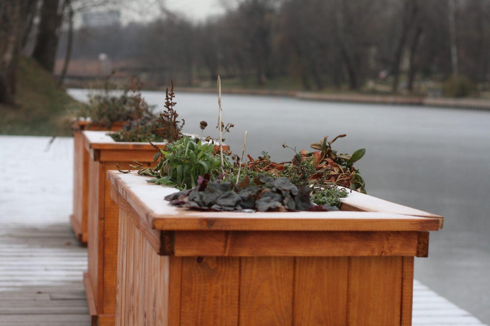 зима в Москве, погода, природа