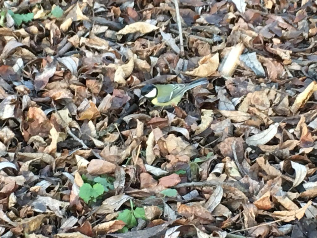 проект Разделяй и умножай, экологическая акция