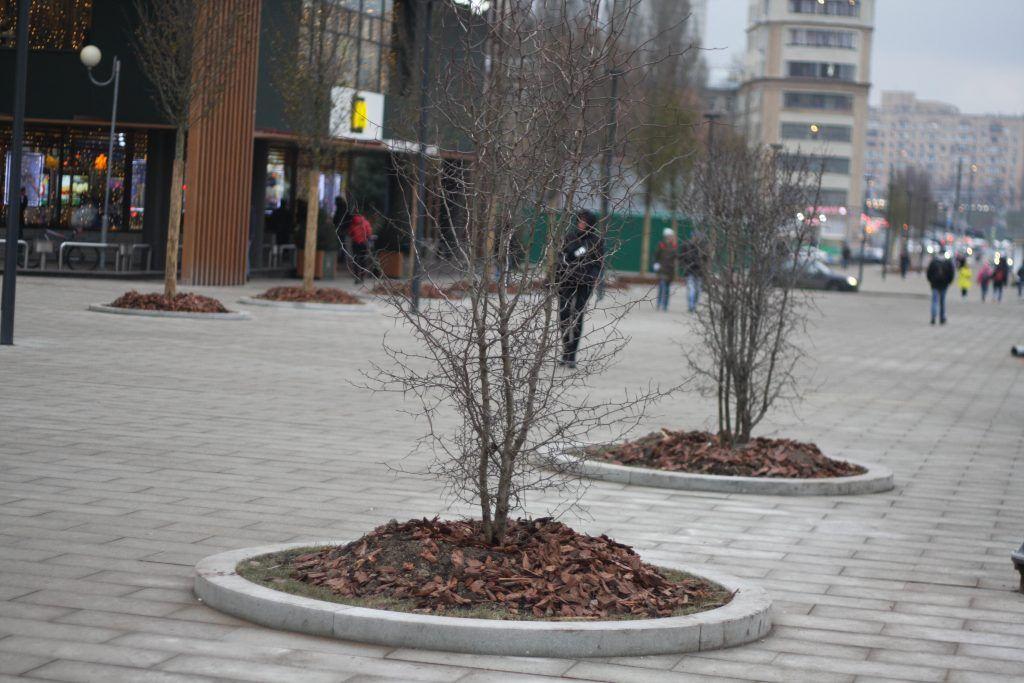 деревья, озеленение, благоустройство