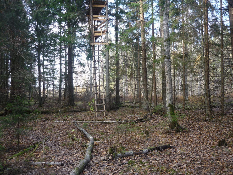 лес, охота, кабаны