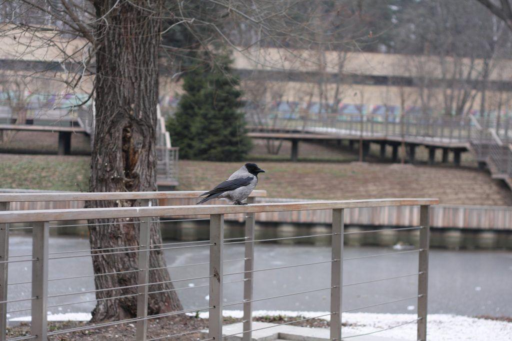 зима в Москве, природа, птицы