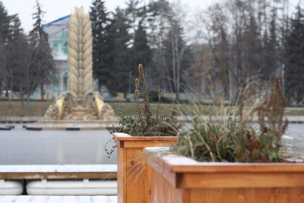 зима в Москве, природа