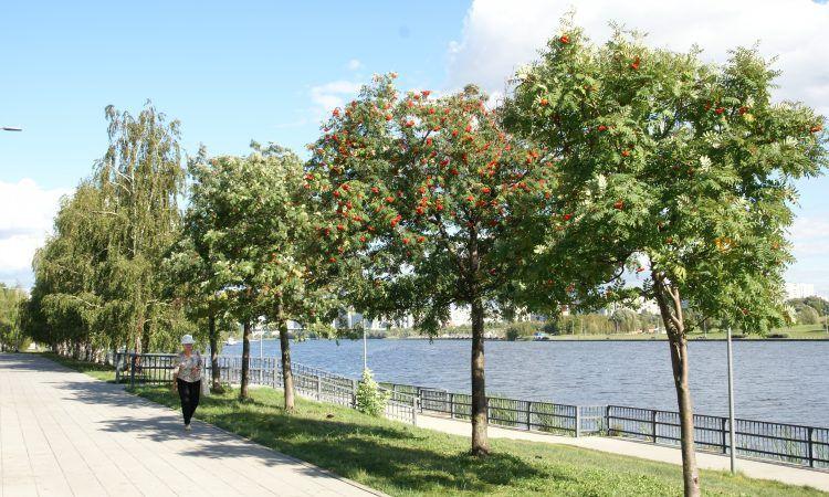 В парке 850-летия Москвы начали высаживать деревья