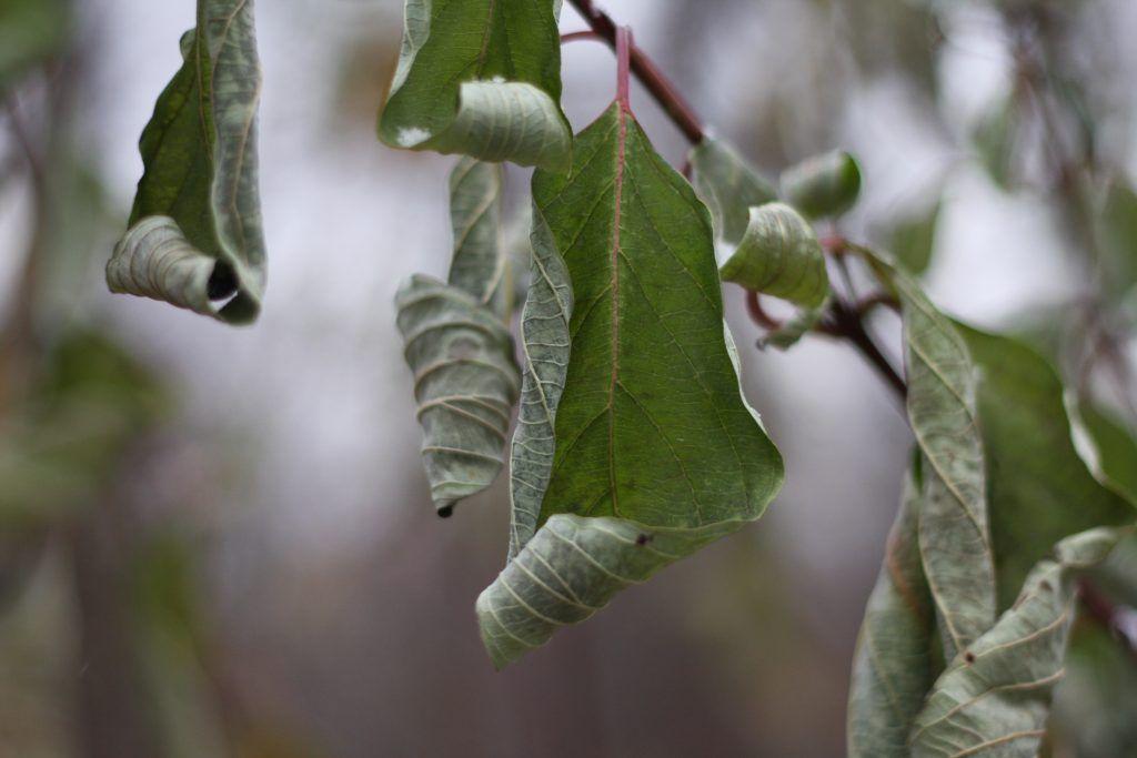 зима в Москве, природа, листва
